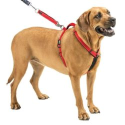 How to Choose the best Harness for dogs